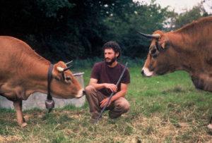 Les ruminants participent à la fertilité du domaine.
