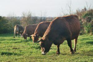 L'élevage respectueux de l'animal est au cœur de l'agriculture biodynamique.