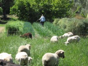 Complémentarité des productions animales et végétales au sein d'un organisme agricole.